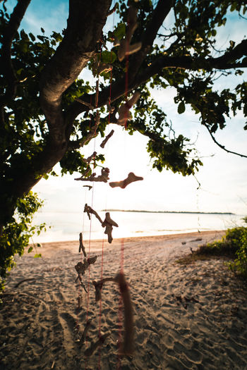 Tree Land Sand Beach Nature Sky Plant Two People Day Water Real People Sea Outdoors Beauty In Nature Leisure Activity Childhood Sunlight Men Scenics - Nature