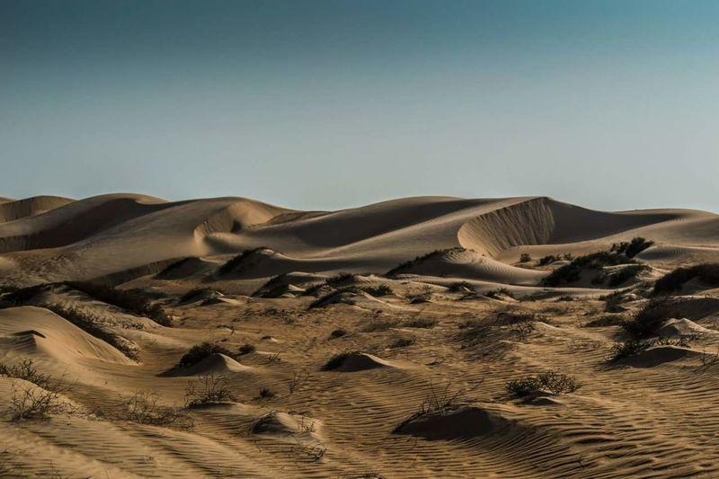 Desert dunes wahiba sands Oman