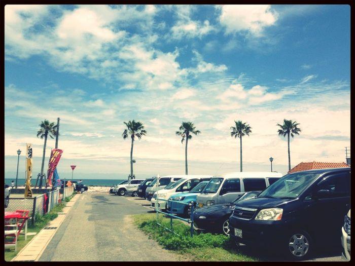 Beach Sky Palm Trees