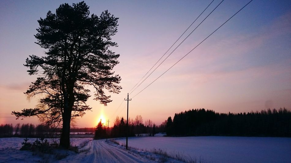 Sunset January Landscape Nature BIG Tree Winter Weather Road CoutrysideEyeEm Nature Lover Photo Of The Day Home Is Where My Heart Is