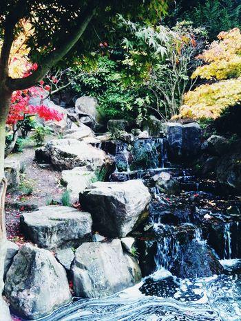 kyoto gardens holland park 3gs