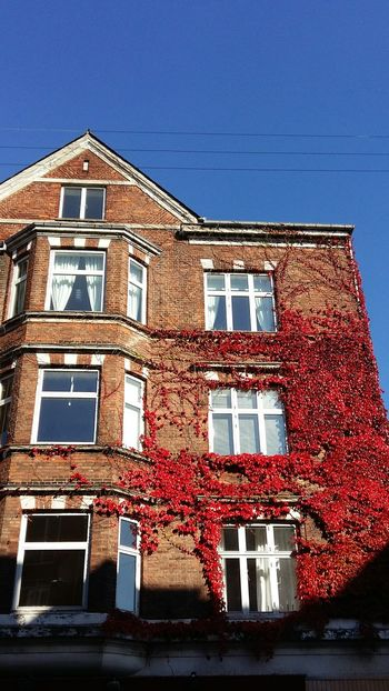 Architecture Building Exterior Low Angle View Built Structure Window Red Outdoors Sky Day Sunny Day Cityscape City Silhouettes Of A City Summer Summervibes Aarhus, Denmark Sunlight Summer Views Plant Life Red Leaves🍂 Plants 🌱 City Life City Explorer Red Blue