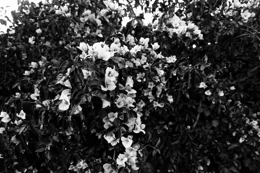 I said: 🗣️🔊 everything is Black 🗣️🔊 everything is black 🗣️🔊everything is black 🖤 Nature Flower Growth Dead Colors Beauty In Nature Fragility Plant Leaf Blooming Tranquility Freshness Flower Head Darker Darker Days Blackandwhite Monochrome Shades Of Grey Black Vs White Contrast Minimalism Minimal Minimalistic Shootermag Mobilephotography
