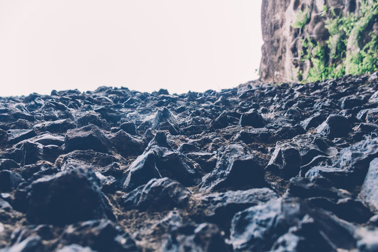Close-up of lichen on rock against clear sky