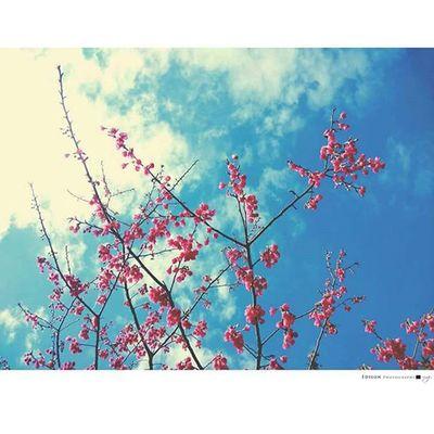 【 再一次 】 為自己創造一個 美好且勇敢的經驗 用自己的速度 走進去 Flower 365Snap Sky Sakura
