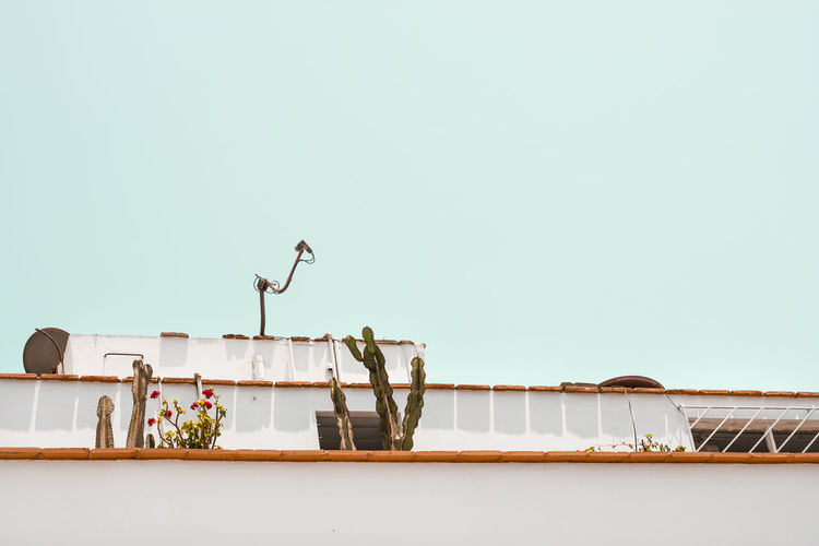A balcony and cactus plants in Lima Peru. Cactus Cactus Flower City Lima Peru Turquoise Colored Architecture Balcony Building Exterior Built Structure Citylife Clear Sky Copy Space Flower Low Angle View No People Plant Roof Sky South America Wall - Building Feature
