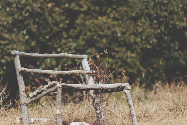 wooden bench Cherapunjee Northeastindia Sohara Wodden Bench Tree Bird Flower Sky