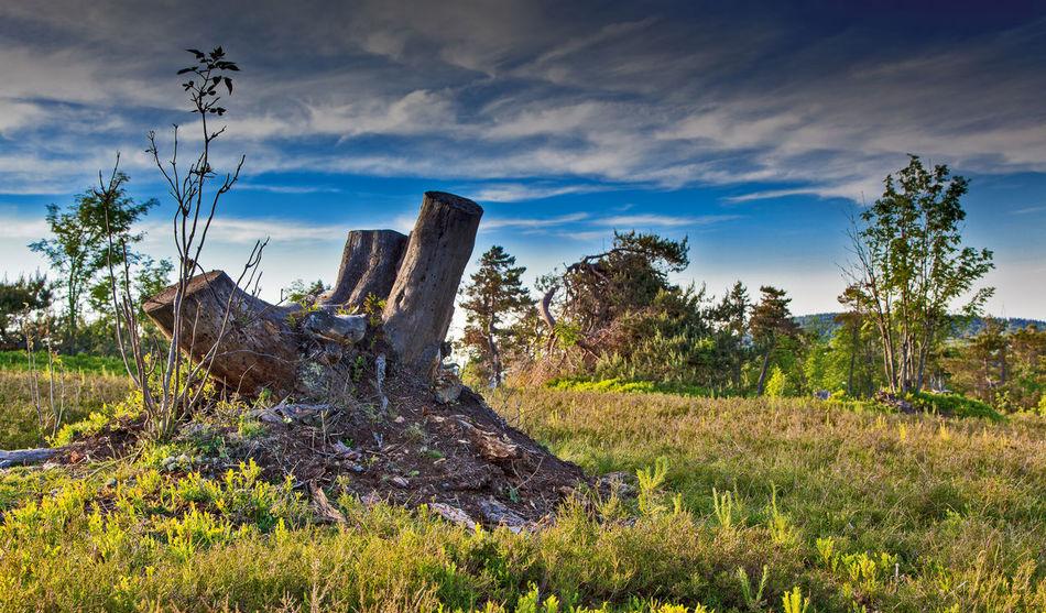 Heidelandschaft Hochheide Sauerland Beauty In Nature Cloud - Sky Growth Nature Tree