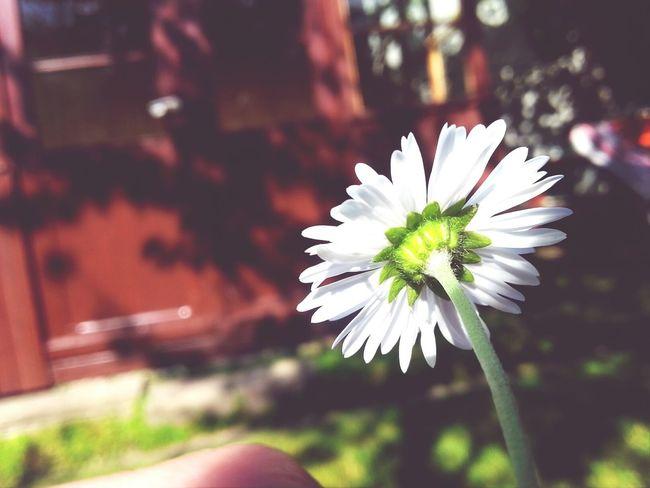 First Eyeem Photo Flower Summer! ♥ Like4like