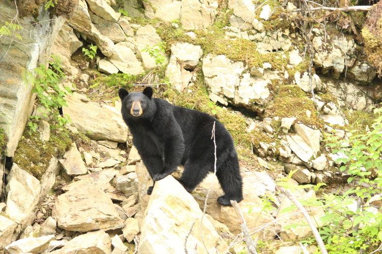 Black cat sitting on rock