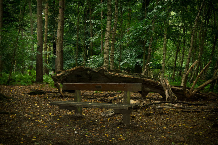 Bench Fallen Tree Forest Walk Beauty In Nature Day Forest Growth Landscape Nature No People Outdoors Thick Tranquil Scene Tranquility Tree Tree Trunk Walk In The Woods WoodLand