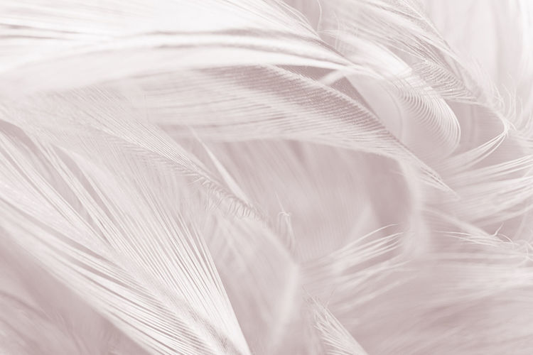 Backgrounds Beauty In Nature Close-up Extreme Close-up Feather  Flower Fragility Full Frame Growth Indoors  Lightweight Macro Natural Pattern Nature No People Pattern Plant Selective Focus Softness Vulnerability  White Color
