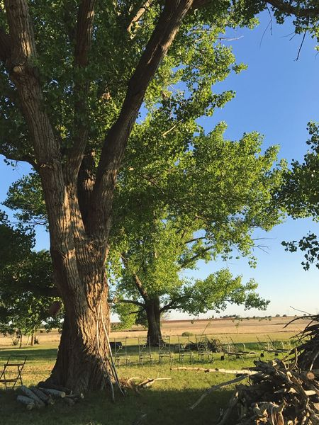 """Under The West Texas Cottonwoods"" An inviting retreat from the warm West Texas sun on a spread bordering the cotton fields of the Lubbock, Texas region. Tree Tree Trunk Landscape Scenics Cottonwood Cottonwood Trees West Texas Texas Cottonfields Tranquility Texas Landscape Tranquil Scene"