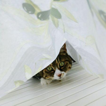 Under the tablecloth Cat Garden Table Outdoors Summer No Sunshine Bastet Boss Cat Female Cat