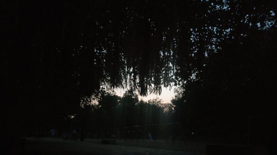 Gandhinagar Sunset Night Out Under Tree