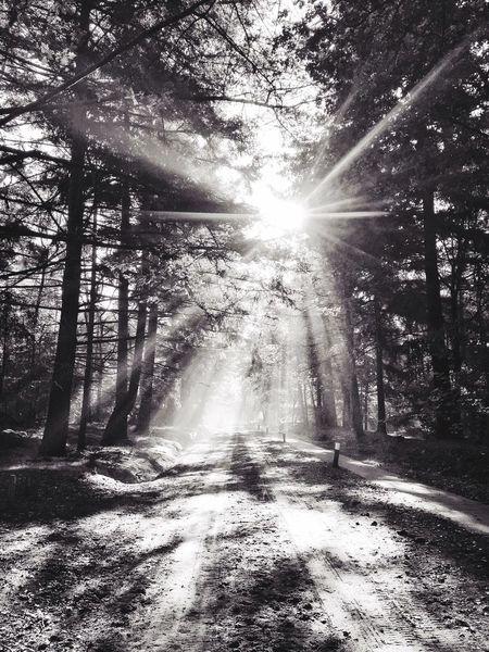 Blackandwhite Sunshine Nature