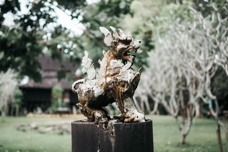 Singha wood statue Art And Craft Sculpture Representation Creativity Nature Tree Craft Animal Representation Plant Park Wood - Material Solid Wooden Post Mouth Open