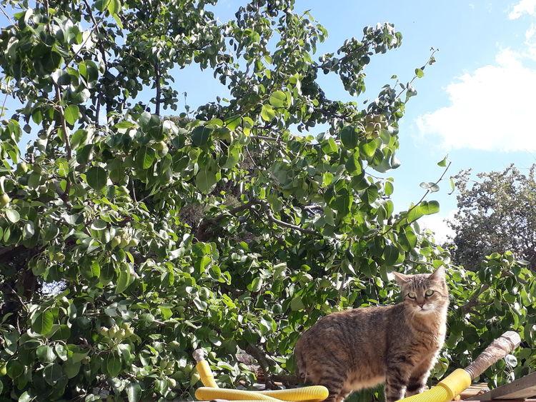 Feline Karalis Panoramashot Nofilter First Eyeem Photo Lifeisgood Amateurphotography Italian Sardegna Passion Photoshoot IT EyeEm Nature Animal Themes Cutness Cat Animal Italianeography