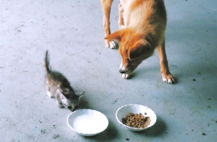 Kitty Doggy Mealtime The Week On EyeEm