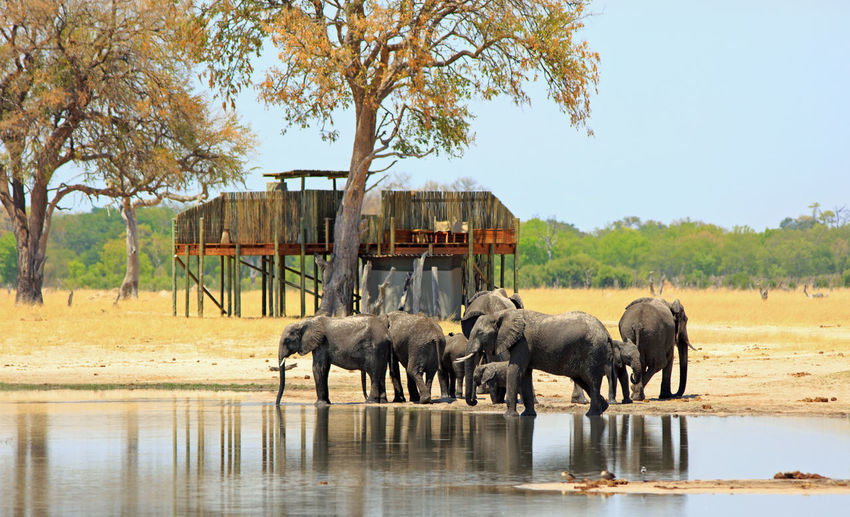 Animal Wildlife Animal Animals In The Wild Animal Themes Mammal Nature No People Day Water Group Of Animals Tree Elephant Waterfront Lake Outdoors Animal Family Drinking Herd Tree House Tourism Conservation Wildlife & Nature Animals In The Wild