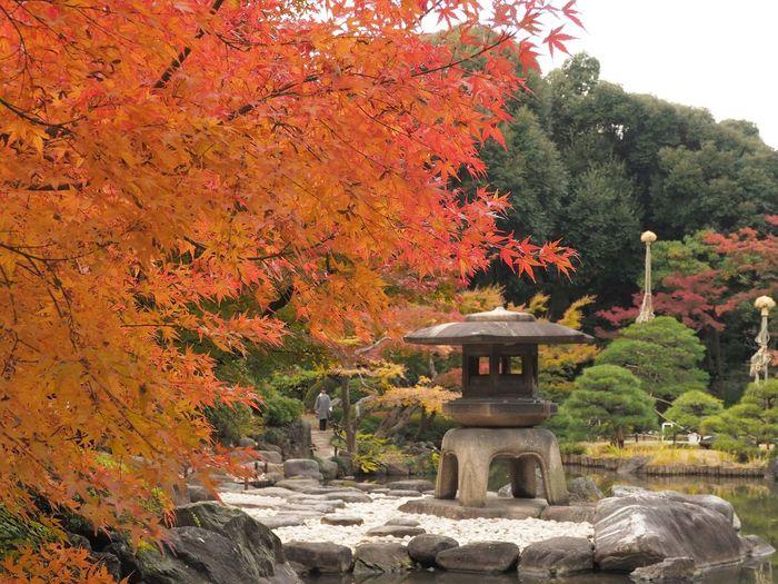 2018/12/09 Sun ☀🍃 秋は駆け足 見頃だった頃の 旧古河庭園 の紅葉。 さ、今日もお仕事っす。 行ってきま〜す 秋は駆け足 旧古河庭園 ファインダー越しの私の世界 ファインダーは私のキャンパス オリンパス Olympus E_M5Mark2 Om_d ミラーレス Photograph Photography Unsquares カメラ日和 お写んぽ 東京カメラ部 スナップ写真 Tokyo Beautiful カメラのある生活 あなたに見せたい写真がある 写真は心のシャッター 恋するカメラ はなマップ Tree Autumn Leaf Architecture