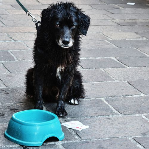 Full Length Of Wet Dog Sitting Next To Feeding Bowl At Sidewalk