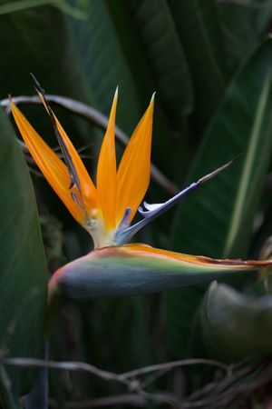 looks like a bird, but it is a flower ;) Beauty In Nature Bird Of Paradise - Plant Blooming Close-up Day Flower Flower Head Fragility Freshness Growth Leaf Nature No People Outdoors Petal Plant Strelitzia This Is Latin America
