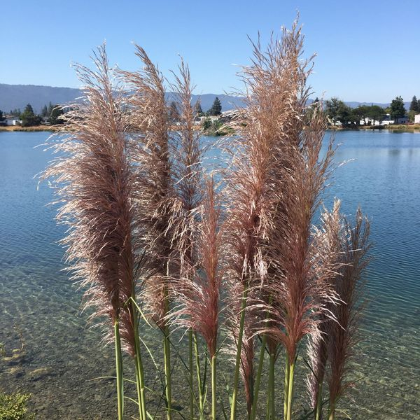 Nature Plant Water Growth Beauty In Nature Clear Sky Close-up Vasona Lake