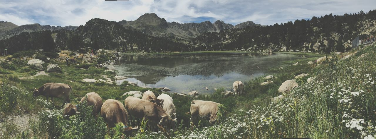 Panoramic view of cows grazing at lakeshore by mountains against sky