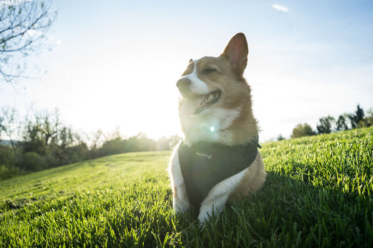 Close-up of dog sitting on field against sky