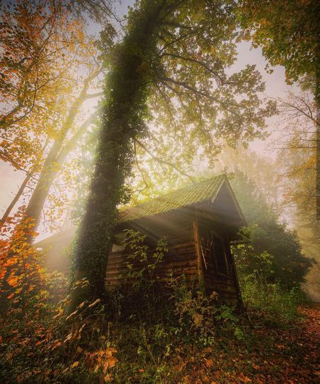 Sunbeam Forest Fog Beauty In Nature Sunlight Nature Tree Horizontal Outdoors Leaf Scenics Plant Mystery The Way Forward Multi Colored Nature On Your Doorstep EyeEm Nature Lover From My Point Of View Autumn Colors Of Autumn Nature WoodLand Freshness Myuniverse Plant
