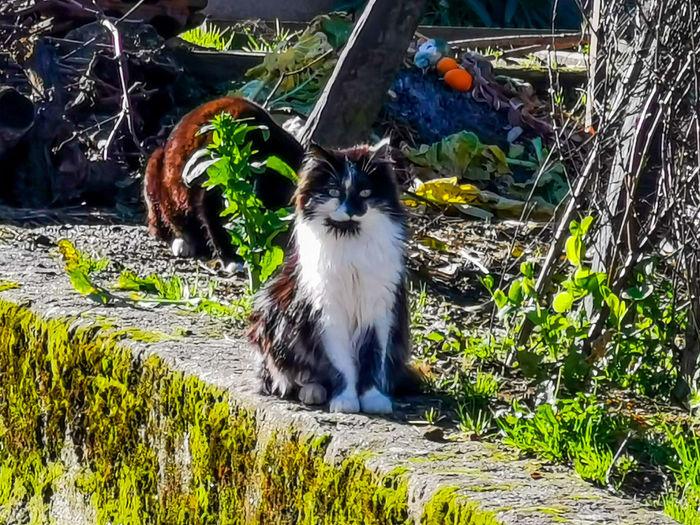 Portrait of cat on ground