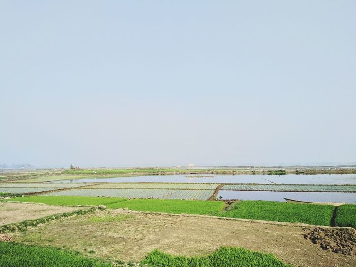 paddy fields Beautiful Bangladesh Visit Bangladesh Bangladesh Agriculture Field Rural Scene Crop  Farm Growth Nature Outdoors Landscape Beauty In Nature Rice - Cereal Plant Cereal Plant No People Scenics Sky Irrigation Equipment Tranquility Day Rice Paddy Working