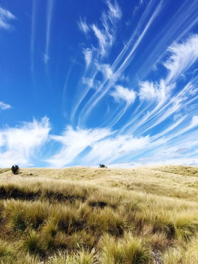 Windswept skies. Sky Field Landscape Nature Blue Growth Grass Tranquil Scene Day No People Tranquility Beauty In Nature Scenics Outdoors Plant Cloud - Sky Hawaii