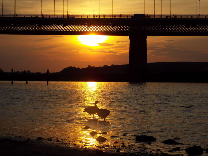 Silhouette birds at riverbank against bridge during sunset