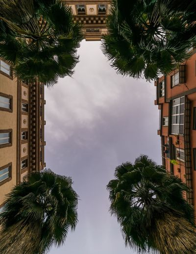 Low angle view of palm trees by buildings against sky