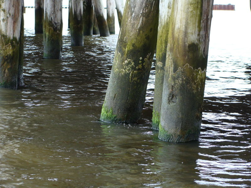 Pier Piles Wave Wood Day No People Piles Of Wood Water