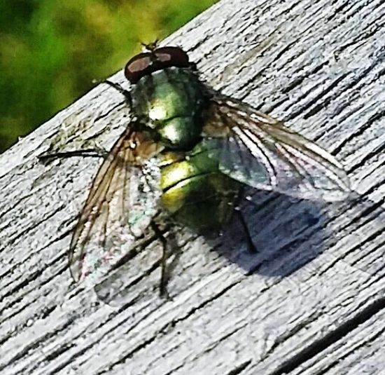 Fly Taking Photos Green Fly Outdoor Photography Macro Photography Macro Nature Macro Insects Insect Photography Macroshot Fly On Chair Weekend Activities Lots Of Green The Week On Eyem