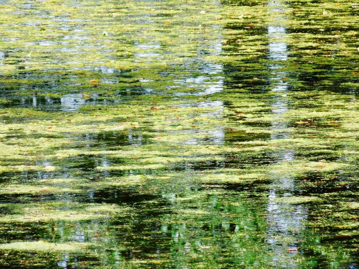 Best travel moments ... Water Reflections Beauty In Nature Close-up Day Flood Full Frame Green Color Lake Nature No People Outdoors Reflection Tranquility Tree Water Water Surface