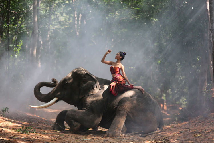 Full length of woman with arms raised sitting on elephant against trees