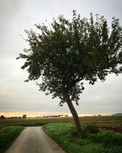 Tree Growth Grass Road Landscape Nature The Way Forward Sky Field No People Scenics Tranquility Green Color Tranquil Scene Beauty In Nature Outdoors Day Rural Scene Way Myplace Soest Germany