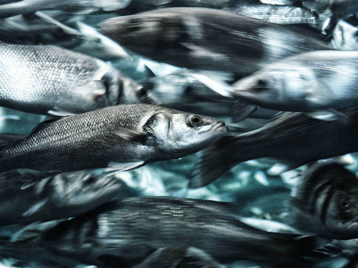Blurred motion of fishes swimming in sea
