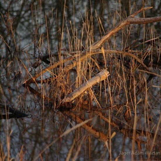 Waterwood Water Nature Puszta