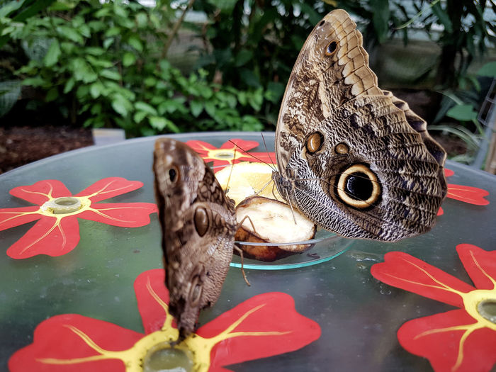 Fish One Animal Animal Wildlife No People Animal Themes Day Close-up Animals In The Wild Outdoors Owl Tortoise Shell Flower Head Butterfly