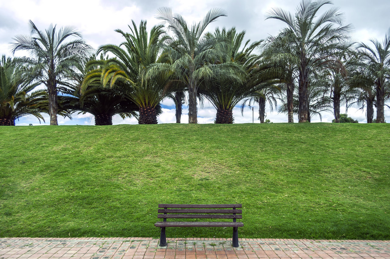 Empty bench against trees and grass in park