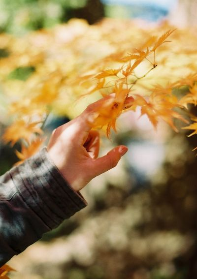Cropped Hand Of Man Touching Autumn Tree