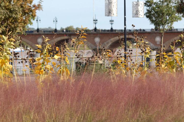 Plants growing on field against arch bridge