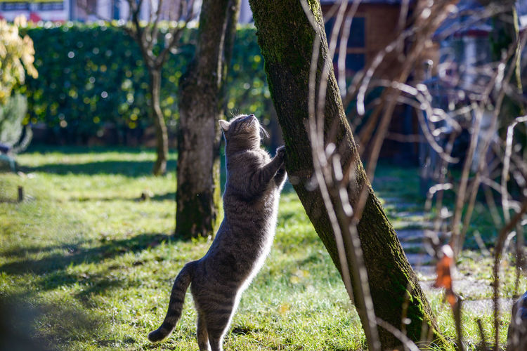 Daily shooting of my domestic cat, he stands for me in the garden half an hour a day Animal Themes Animal Mammal One Animal Plant Animal Wildlife Tree Animals In The Wild Vertebrate Focus On Foreground No People Nature Day Land Grass Domestic Animals Outdoors Standing Trunk Tree Trunk