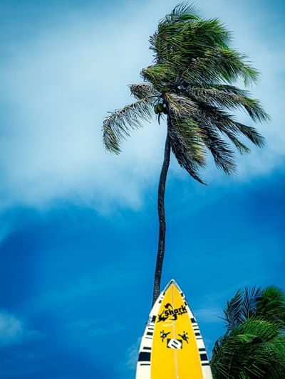 🇧🇷 Windy Day Wind Brazil Green Color Palm Tree Salvador Bahia Travel Photography Blue Sky Clouds Sky Surfboard Travel Destinations Travelphotography Yellow Color This Is Latin America