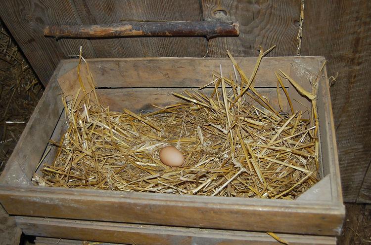 Free Range Chicken Egg Farm Chicken Egg Egg Free Range Straw